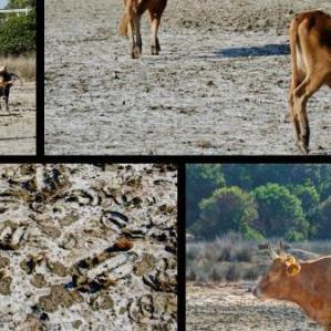 Mosaic Chia Sadinia beach salt flat cows trace fossils sea safari